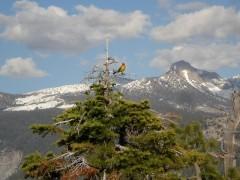 シェラ・ネバダ山脈と色鮮やかな鳥