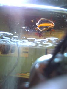 浮かぶウミウシ