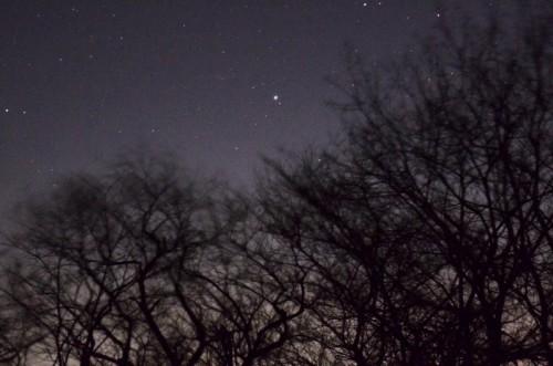 落葉樹が木枯らしで揺れる向こうに星が輝く